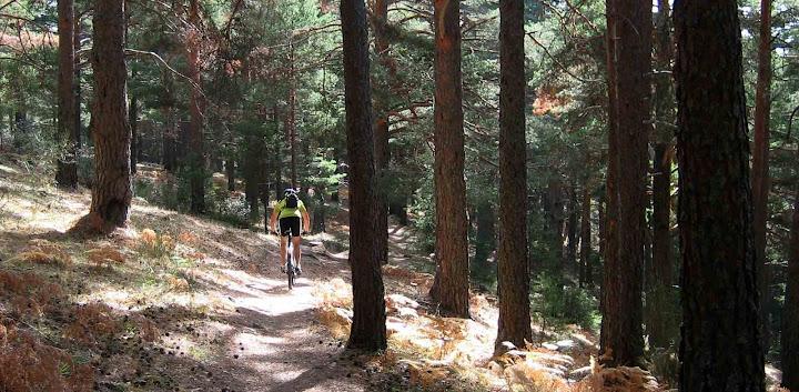 Bosque en La Barranca