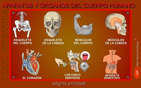 Aparatos y órganos del cuerpo humano