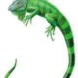 Reptiles (14).jpg