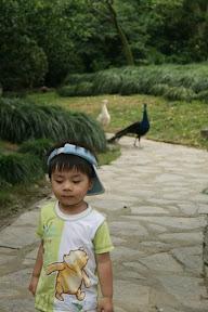 意外的進了無人知曉的鳥園(又或者是乏人問津),和木柵的鳥園比起來差不多,但趣的是裡頭只有我們,難得鬧中取靜,在這裡追逐觀察鳥類真煞有其事,後頭孔雀大哥和祐祐玩追逐戰你追我跑的,玩得開心。