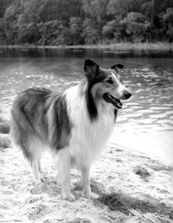 Lassie, 1965