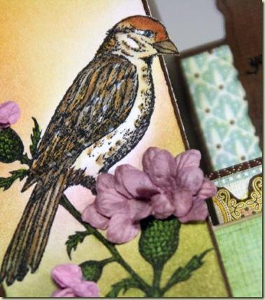 TLC257 bird closeup