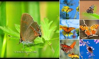 View butterflies