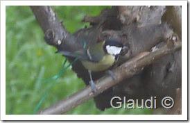Oiseau 1 P1130403