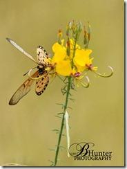 bfly-flower