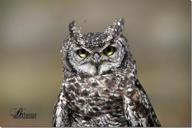 CR-Brd Sanc sptd owl 1