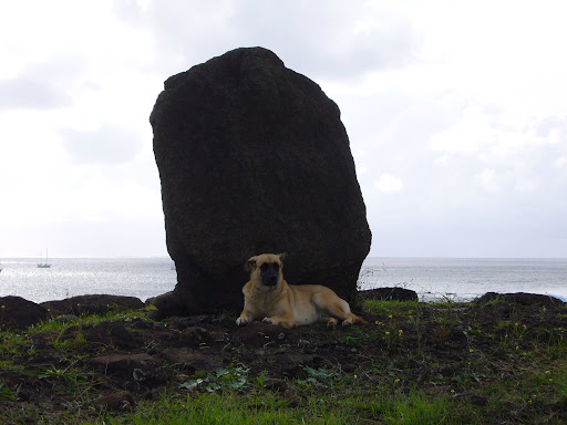Empanada dog.  Always in front of the empada shop next to the harbour.  He enjoys the shade of the nearby moai.