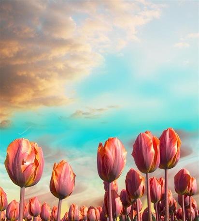 tulips1 (Large)