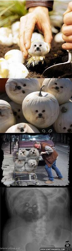 puff-dog-meme-24