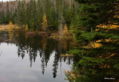 algonking-park-pano12