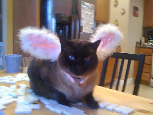 Easter Pooka (Siamese manx)