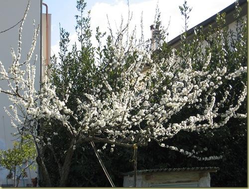 inizi primavera 015