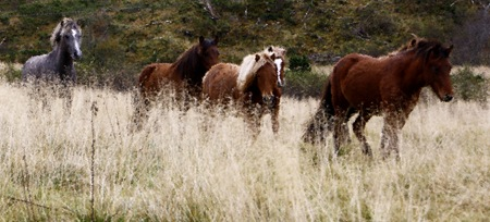 hester2-etter