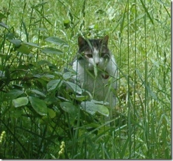 Willie in the grass2
