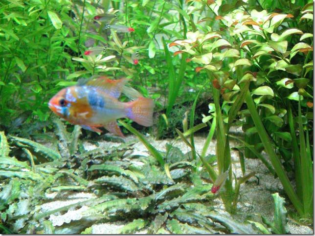 paris aquarium 102210 0000