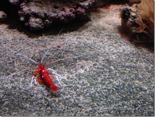 paris aquarium 102210 0002