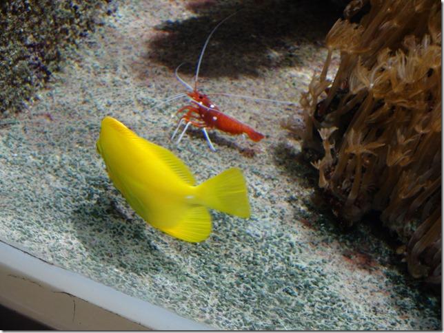 paris aquarium 102210 0003