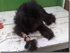 perro_atropellado_blacki