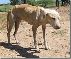 diarreas_en_perros