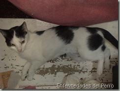 gato atropellado (2)