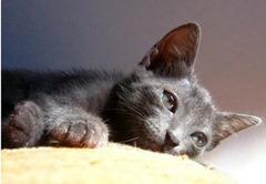 gato_doente