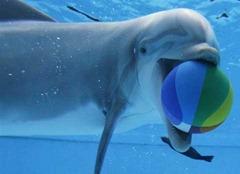 golfinho-bola