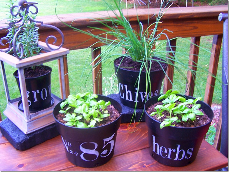 Flower Pots with Chives 020