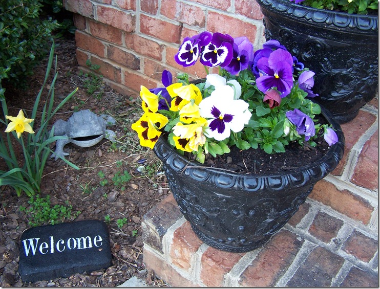 Lemon Poppy Seed Cupcakes and Pansies 015