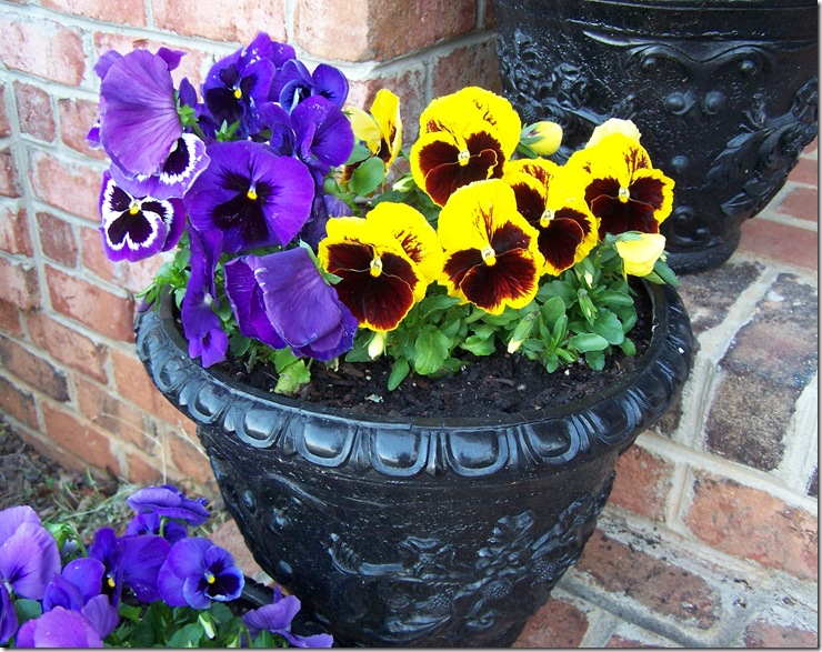 Lemon Poppy Seed Cupcakes and Pansies 014