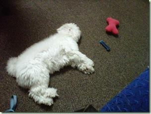 griffysleeping