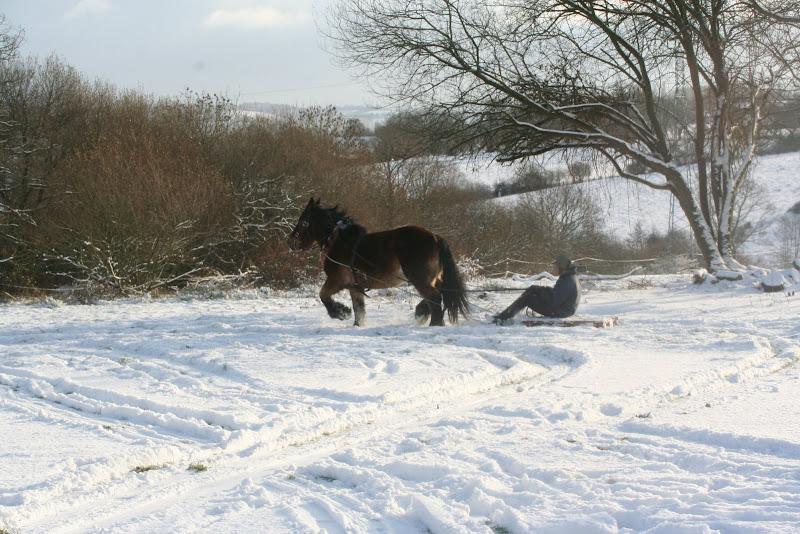 Le  calvados sous la neige... les chevaux s'éclatent! IMG_5210
