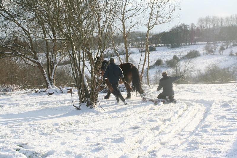 Le  calvados sous la neige... les chevaux s'éclatent! IMG_5185