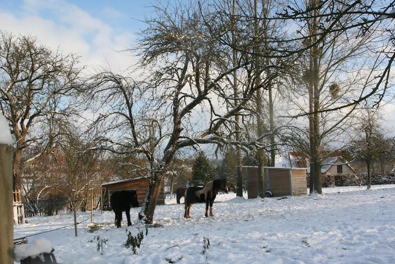 Le  calvados sous la neige... les chevaux s'éclatent! IMG_5158