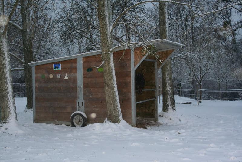 Le  calvados sous la neige... les chevaux s'éclatent! IMG_5068