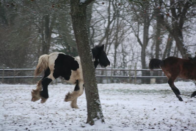 Le  calvados sous la neige... les chevaux s'éclatent! IMG_4945
