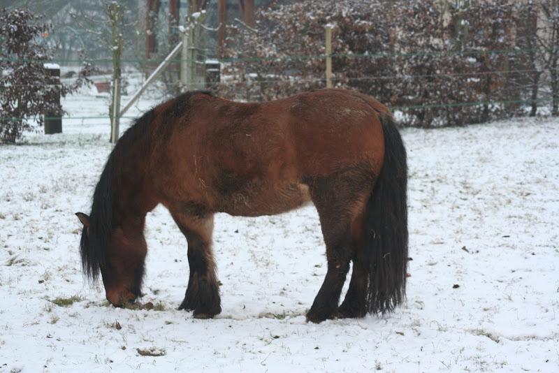 Le  calvados sous la neige... les chevaux s'éclatent! IMG_4927