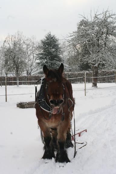 Le  calvados sous la neige... les chevaux s'éclatent! IMG_5099