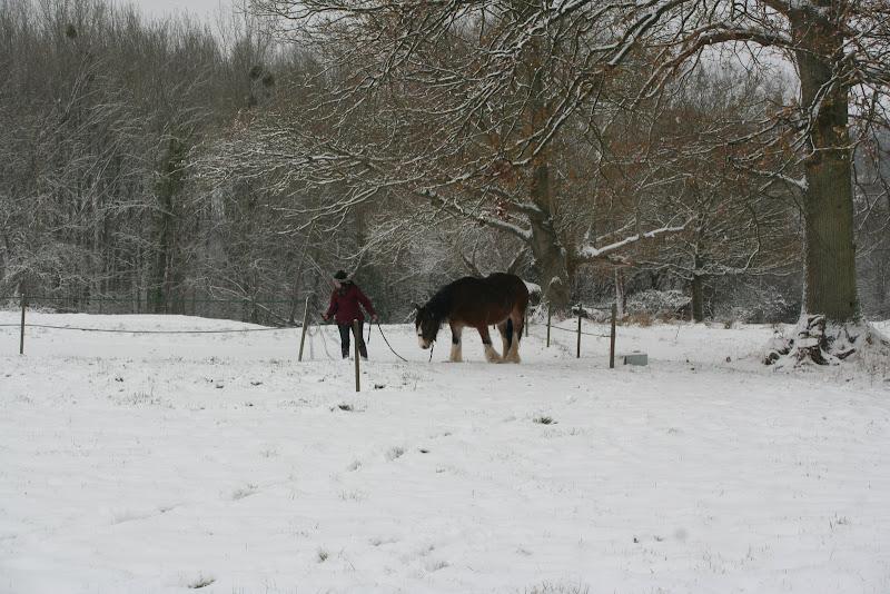 Le  calvados sous la neige... les chevaux s'éclatent! IMG_5091