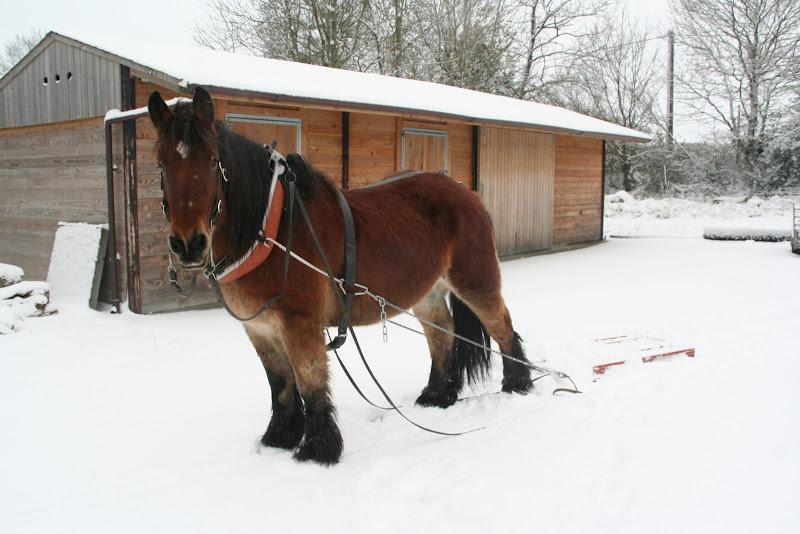 Le  calvados sous la neige... les chevaux s'éclatent! IMG_5085