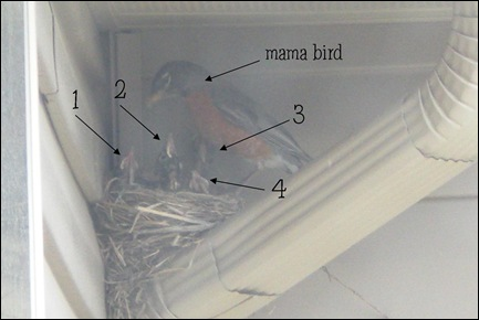 birds labeled