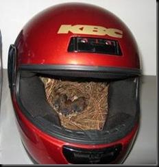 helmet nest