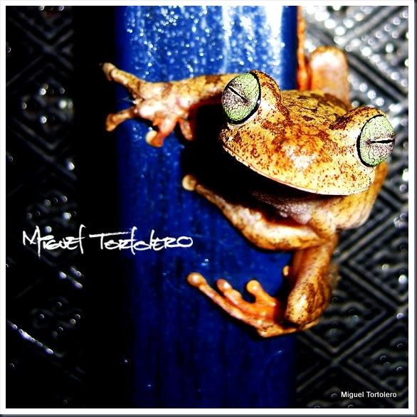 normal frog 2
