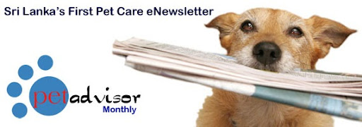pet advisor newsletter