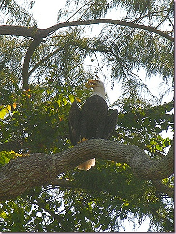 Eagle1407