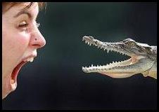 Crocodle