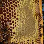 tealino con miele