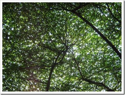 pohonditamansrengseng