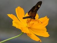 Flor/Borboleta