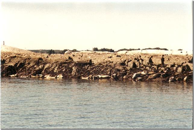 Gorges seals
