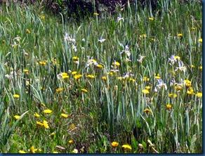 flowers summer 2010 (3)